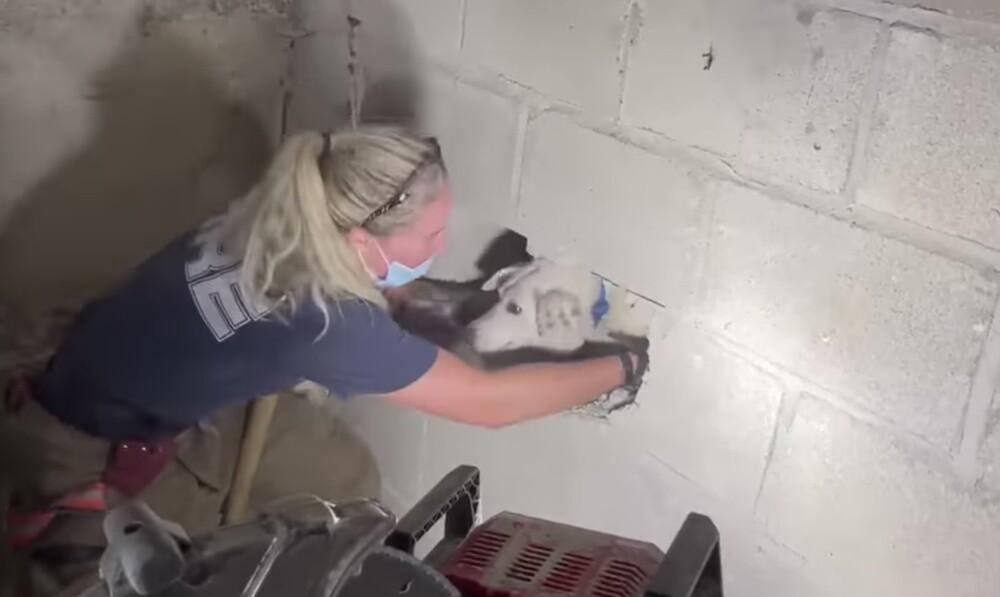 Rescate de perro que estaba atrapado entre dos paredes