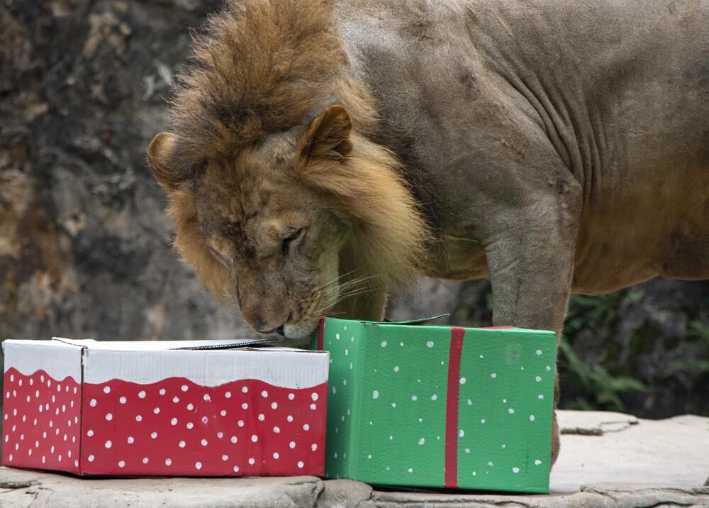 351540_Foto: Cortesía Zoológico de Cali