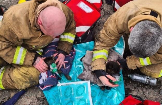 Bomberos rescatan a dos gatos