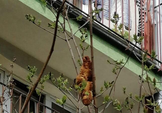 croissant arbol.jpg