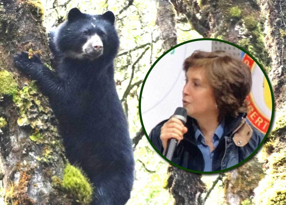 314120_Blu Radio. Julia Miranda Londoño - oso de anteojos. Foto: Twitter Parques nacionales