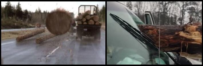 Tronco atravesó el parabrisas de un carro