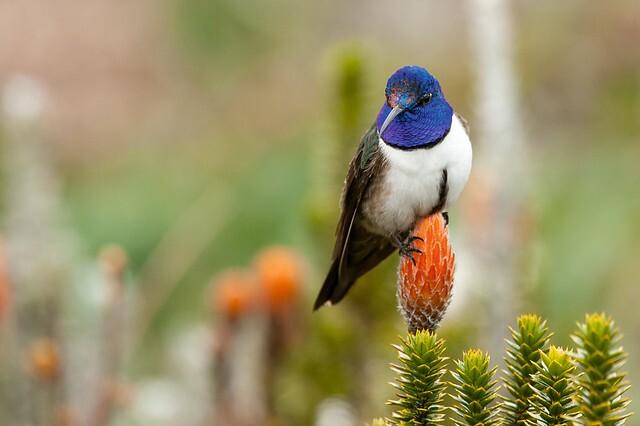 Colombia se vuelve a llevar el primer puesto en evento mundial de avistamiento de aves