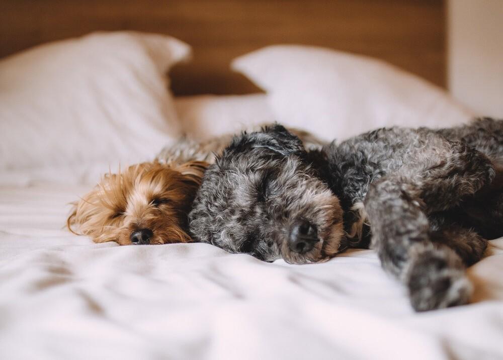 340290_BLU Radio. Mascotas durmiendo // Foto: Pixabay