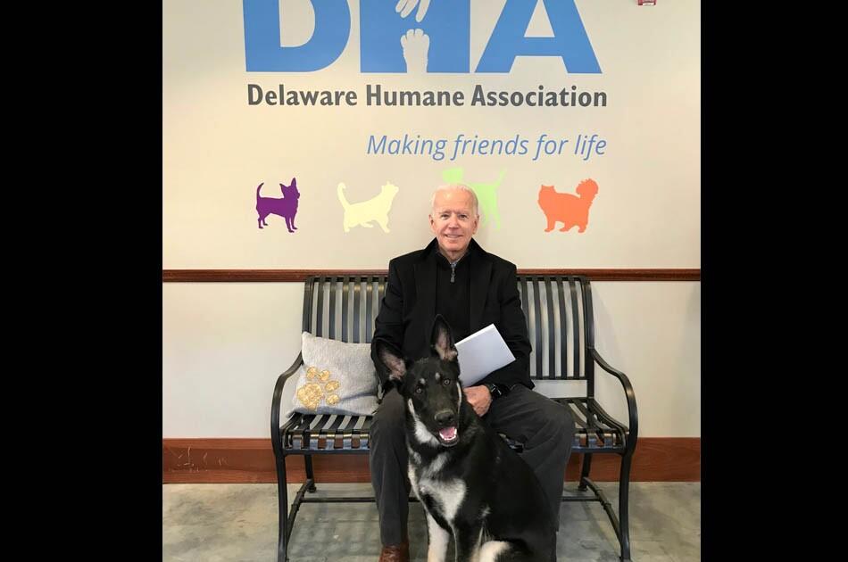 Major, el perro adoptado de Joe Biden, vivirá en la Casa Blanca.jpg