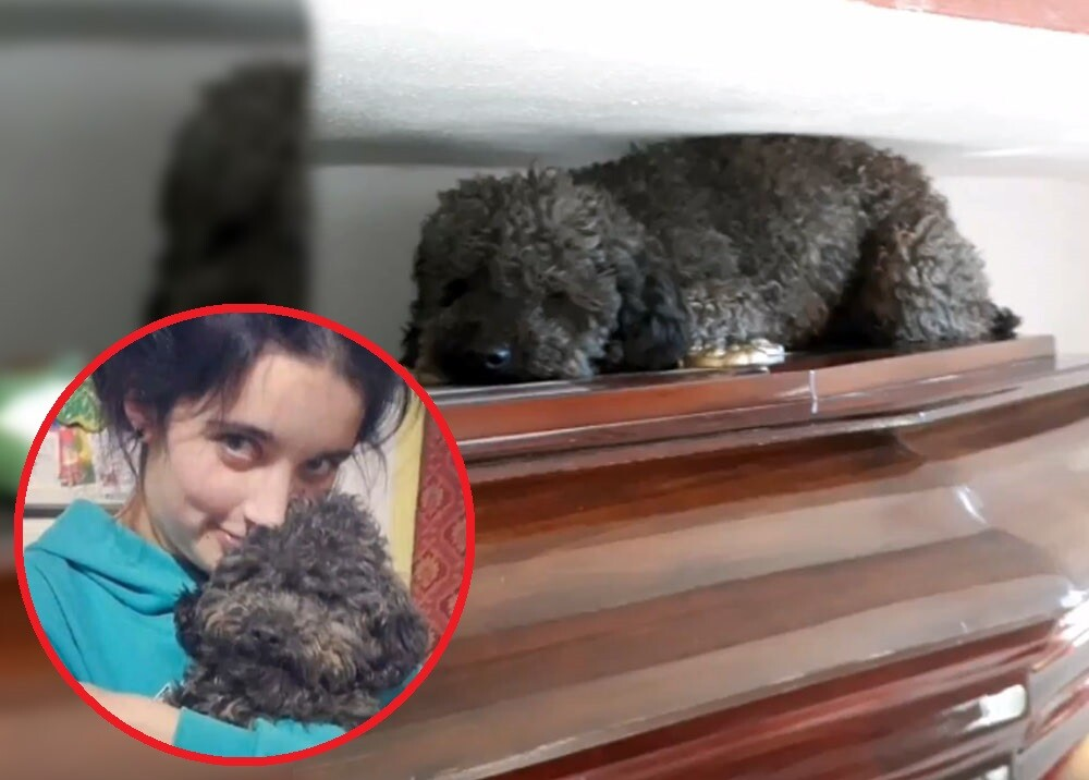 perro que visita la tumba de su dueña muerta.jpg