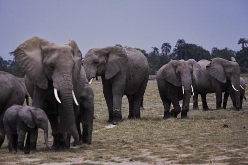 KENYA-NATURE-ENVIRONMENT-CONSERVATION