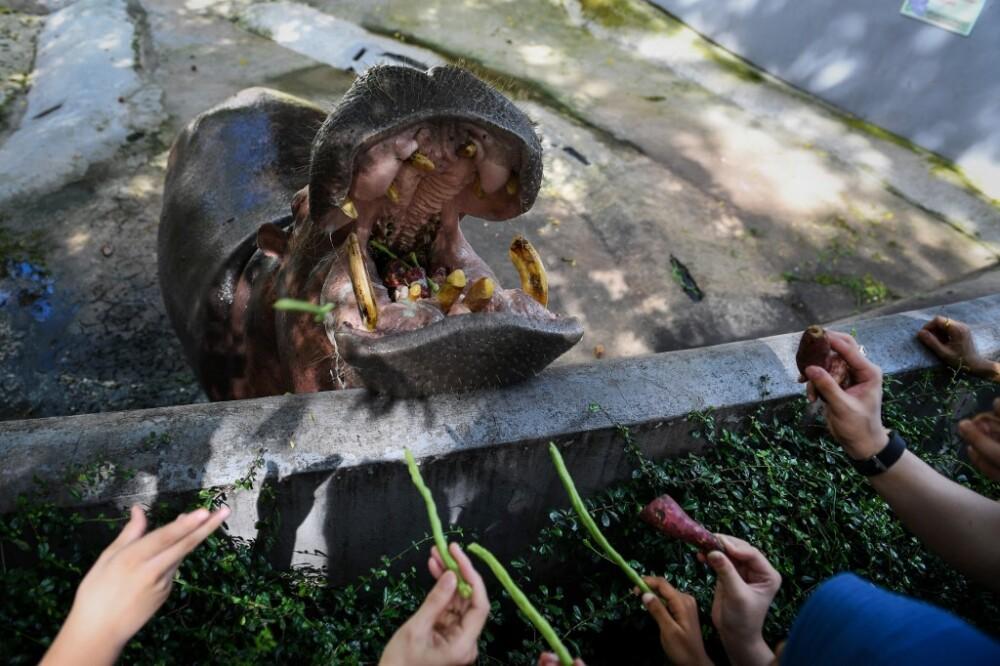Mujer lanza botella plástica a hipopótamo durante Safari en Indonesia