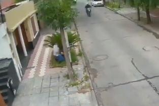 ladron se esconde en palmera.JPG