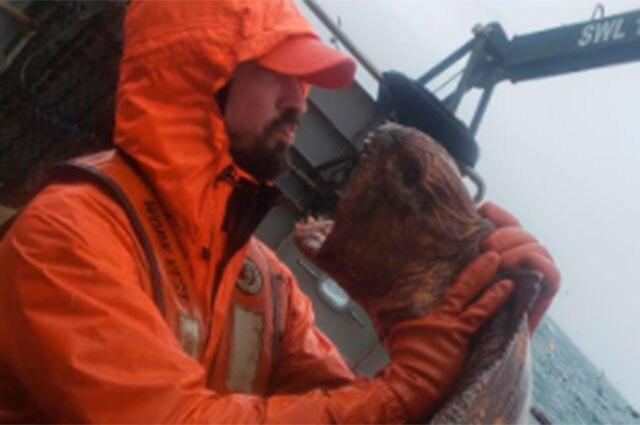 Anguila lobo en Alaska