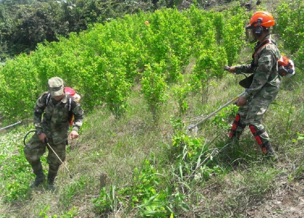 280550_BLU Radio. Foto de referencia: Erradicación cultivos ilícitos / Ejercito