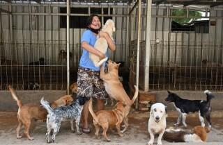doctora en Indonesia rescata perros de carniceros