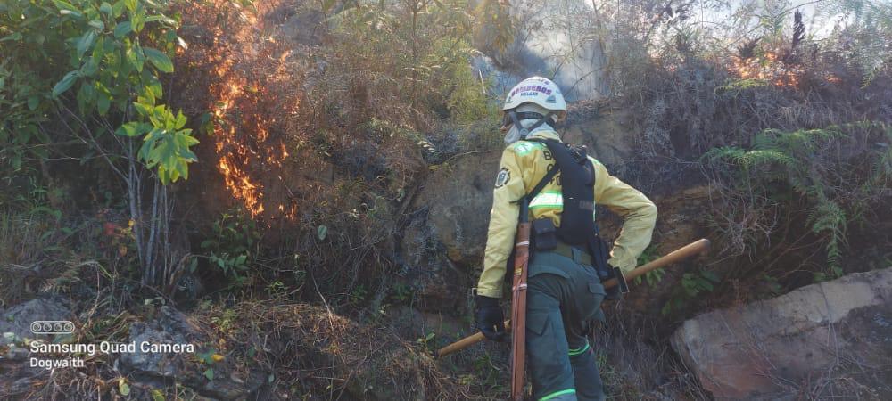 incendio forestal.jpeg
