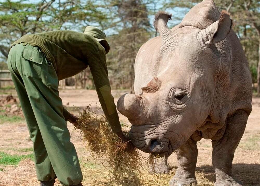 342013_Rinoceronte blanco - EFE