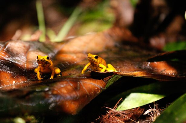 biodiversidad-colprensa.jpg