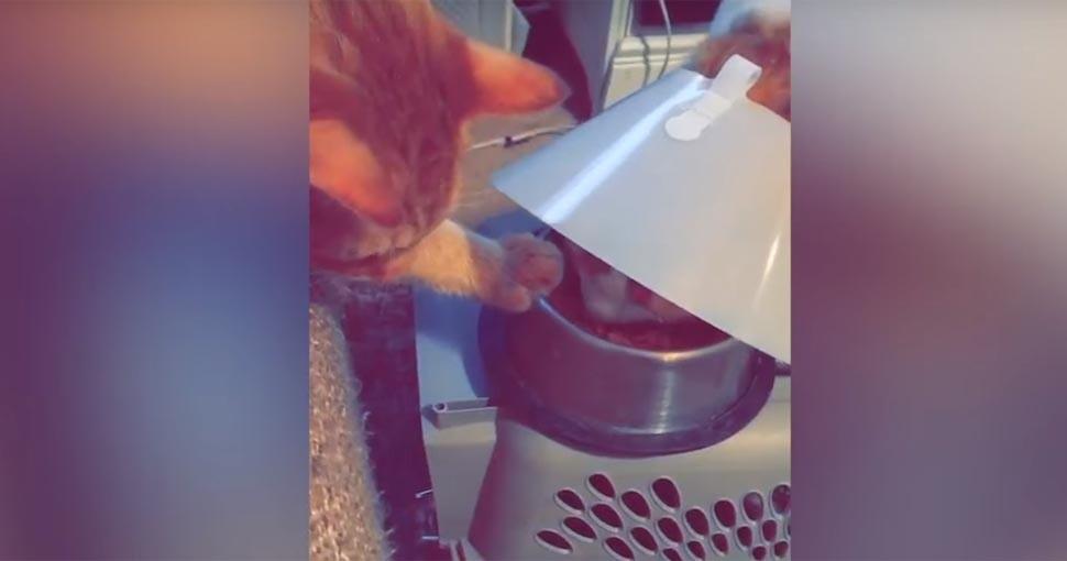 Tierna escena de un gato con su amigo con el 'cono de la vergüenza' se hace viral