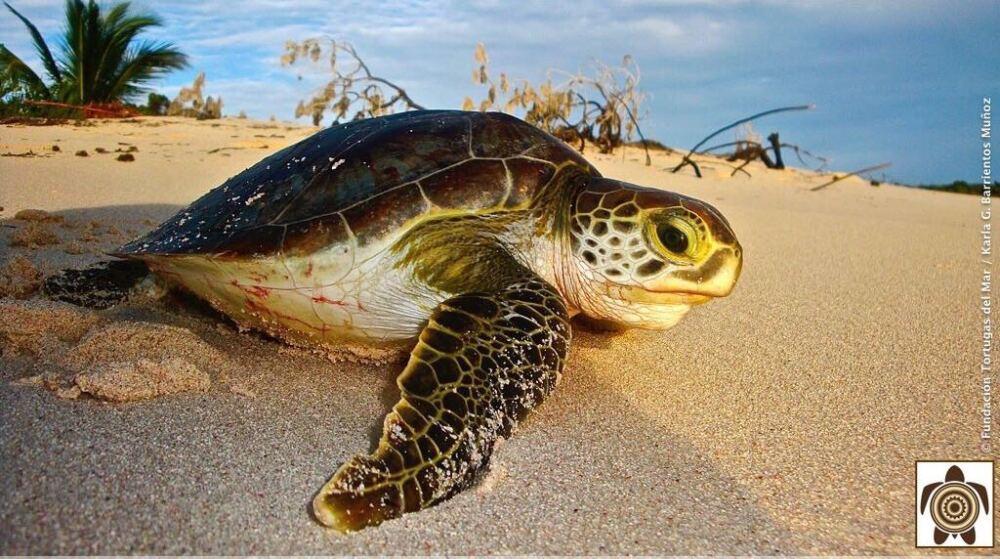 294369_Foto: Fundación Tortugas del Mar