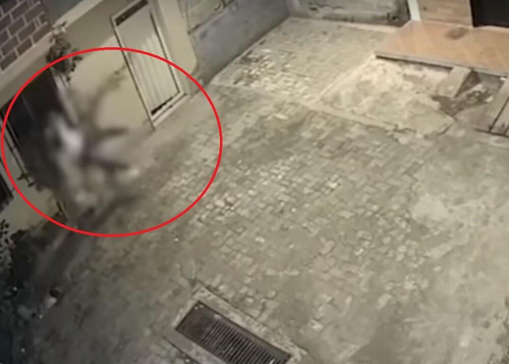 mujer se tiro por un balcon huyendo de golpiza de su pareja.jpg