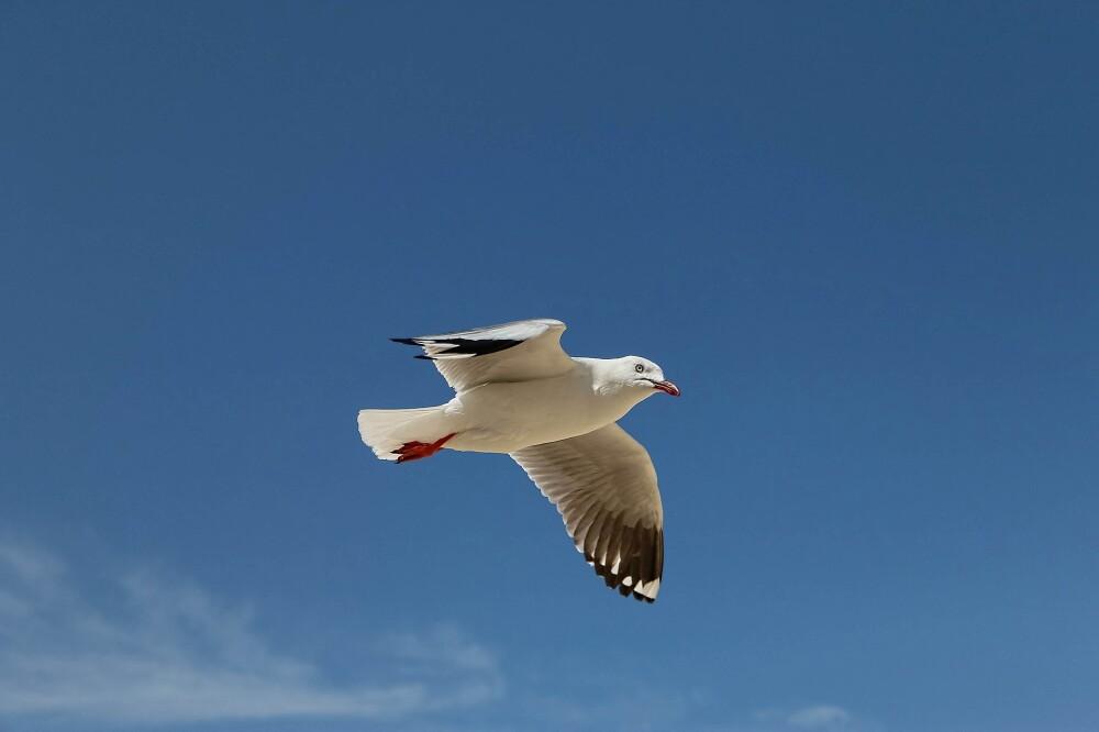 ¡A vuelo de pájaro! Vea las sorprendentes imágenes que grabó una pequeña ladrona