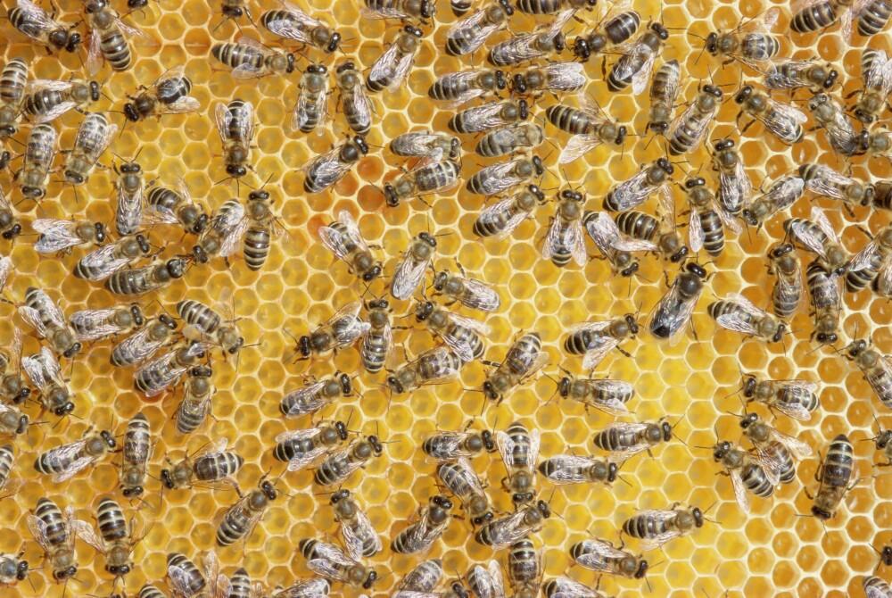 Futbolistas buscan refugio al ser atacados por un enjambre de abejas.