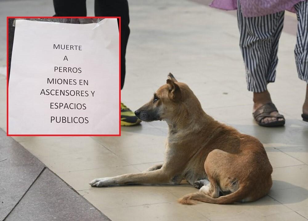 panfletos amenazantes para perros en conjunto del sur de cali.jpg