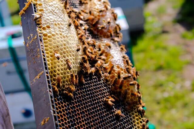 Desadaptados prenden fuego a seis colmenas y matan a más de un millón de abejas