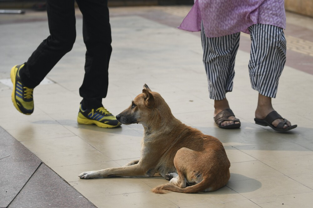 Perro, imagen de referencia / AFP