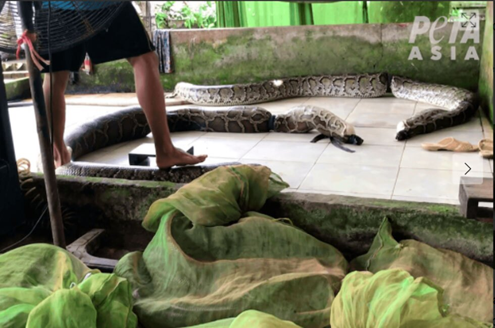 Serpientes PETA