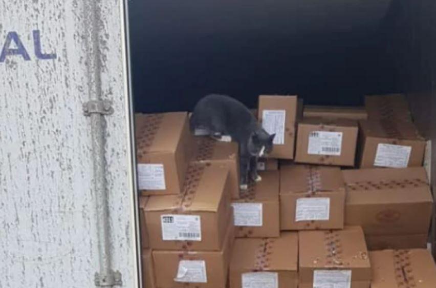 Gato estuvo tres semanas dentro de un contenedor en alta mar.JPG