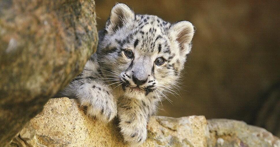 374600_leopardo970.jpg