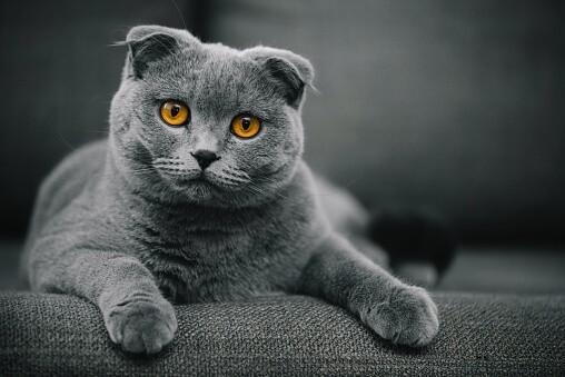 Imagen de referencia, gato