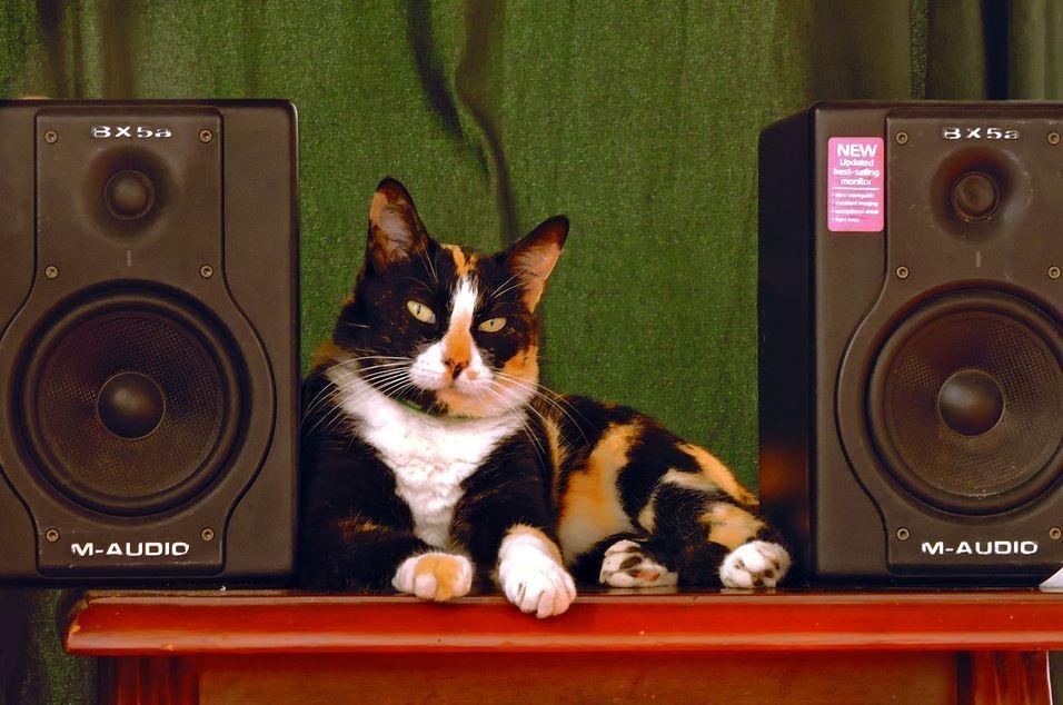 gato DJ