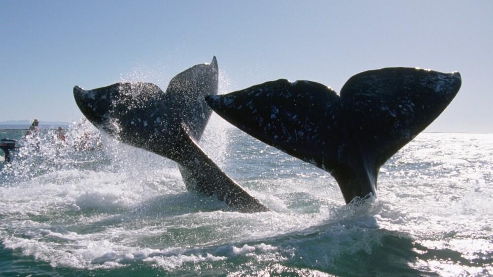 ballenas .jpg