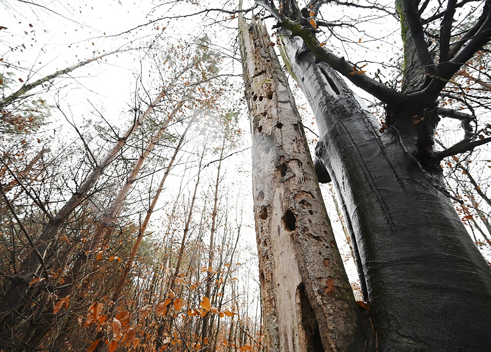20177_El bosque más antiguo del mundo // Foto de referencia: AFP