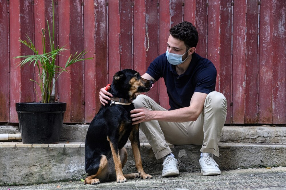 Mascotas, pandemia del COVID-19