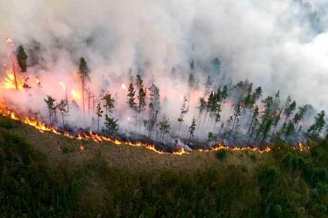 270615_incendio_forestal.jpg
