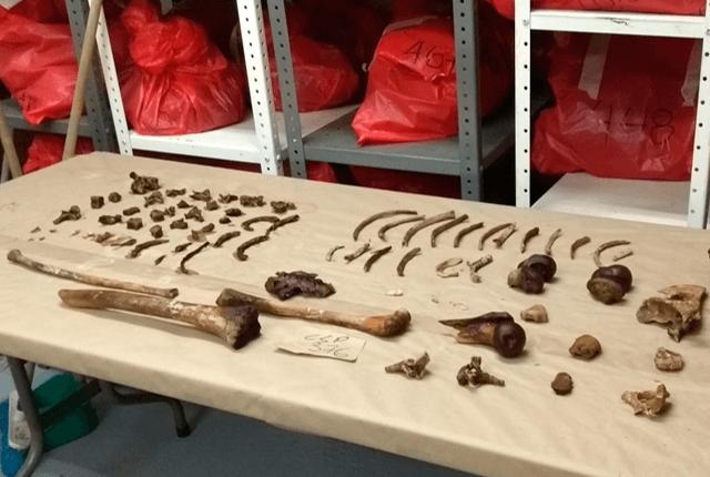 Laboratorio de Osteología Antropológica. Foto: Universidad de Antioquia