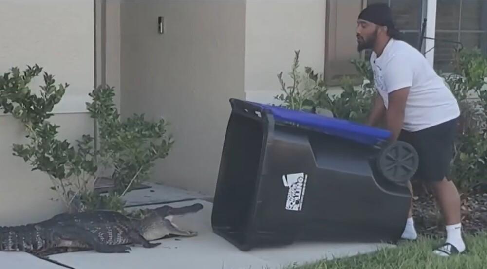 Video: temerario hombre usa bote de basura para atrapar un caimán frente a su casa