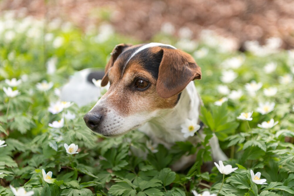 Descubre cómo lograr que tu perro haga sus necesidades en las áreas verdes.