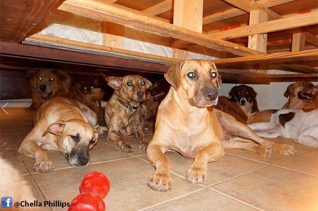 nota-perros-bahamas.jpg