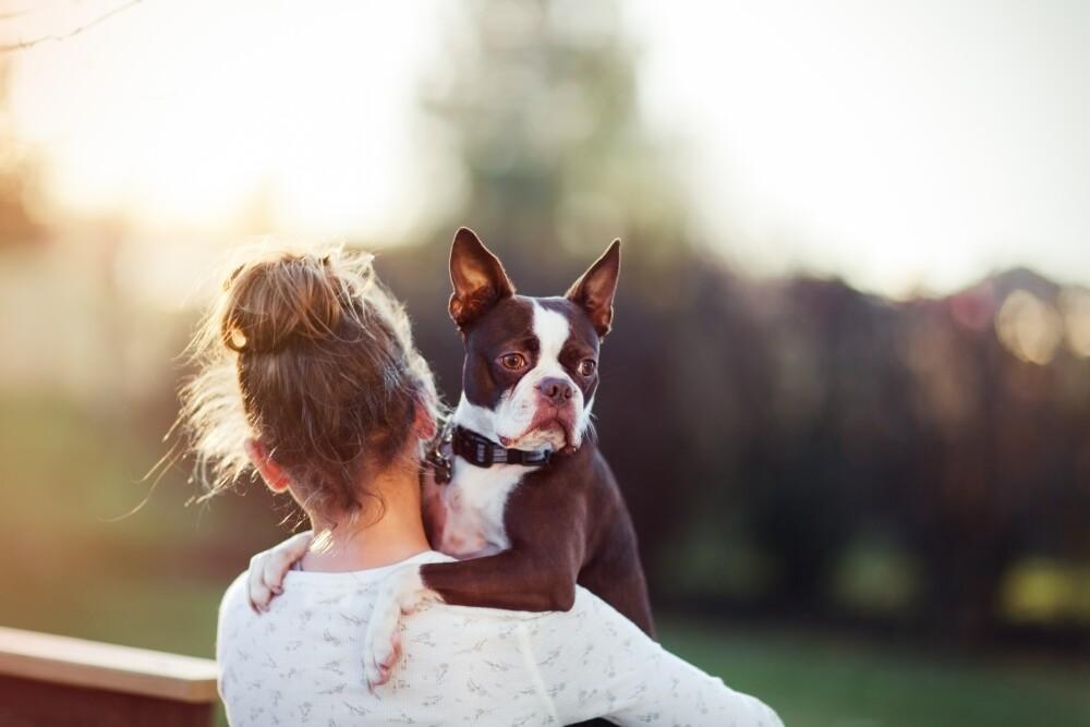 10 year old girl holding her Boston Terrier dog