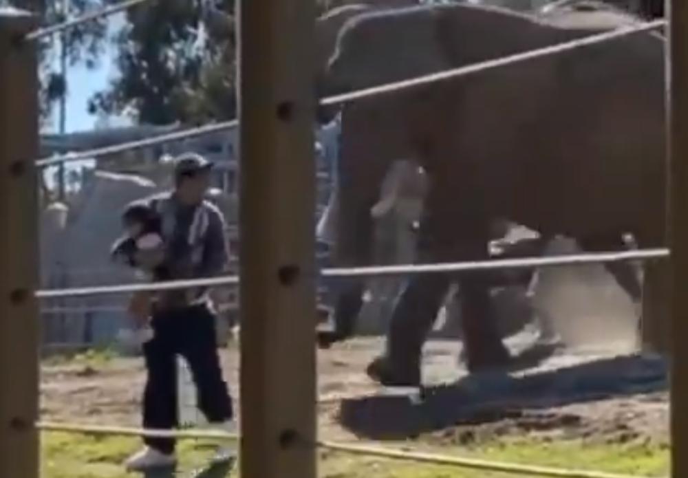 hombre con su bebé en el santuario de elefantes.PNG