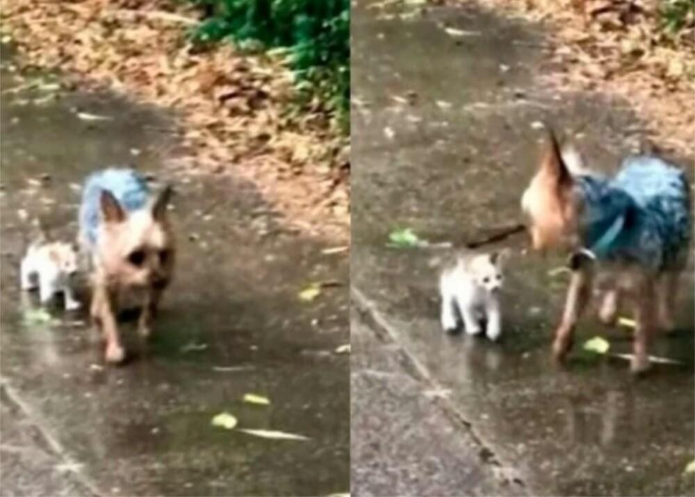 Perro y gatito bebé Foto Youtube Happily.jpg