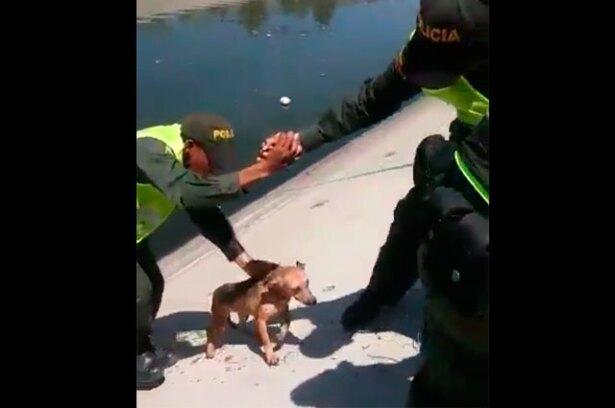 150916-rescate-perro-cano-calipso.jpg