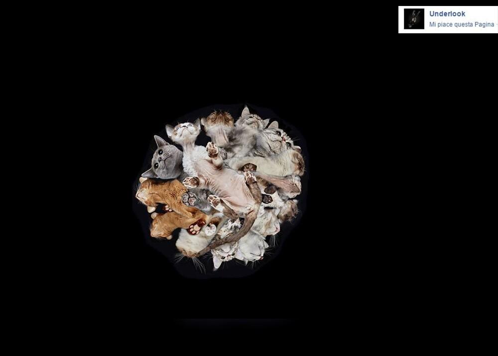 2147_La Kalle - Fotos extrañas de animales domésticos / Foto: Facebook - Underlook