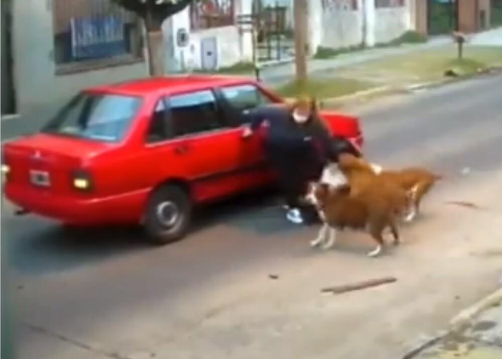 Mujer atacada por tres perros en Argentina Foto captura de video.jpg