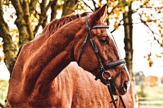nota-ganadora-caballo.jpg