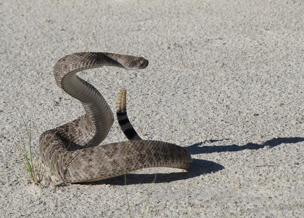 17277_La Kalle - Detenido encantador de serpientes en Marruecos Foto de Pixabay