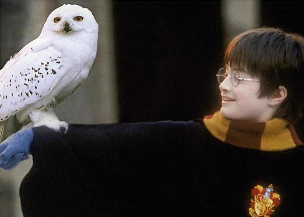 372912_Harry Potter // Foto: Instagram harrypotterfilm