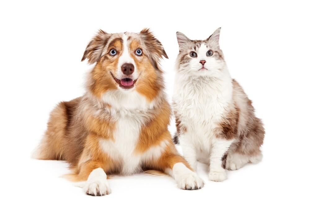 Perro y Gato.jpg